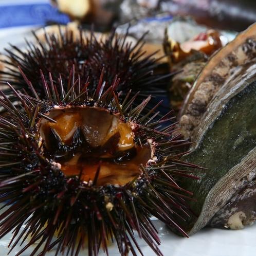 貝尽くしコース◆海鮮◆篠島で獲れたアワビ!うにも夕食に並ぶ時もあります