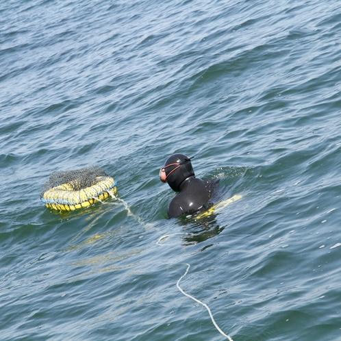 主人が素潜り漁で獲ってくる獲れたての新鮮な海の幸をご提供します!