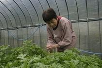農作物の世話をする女将
