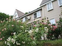 バラの咲く庭〜6月半ばから咲き始めます