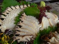 敦賀湾産天然アワビは肉厚で新鮮!刺身のコリコリ感がgood