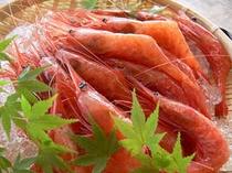 福井県の特産品としても名高い甘海老は格別の味!
