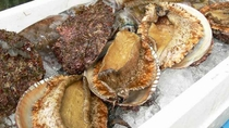 栄養豊富な海で育った肉厚の敦賀湾産活あわびはいかが?鮑付きプランは年中人気もの♪