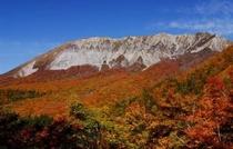 大山1の紅葉