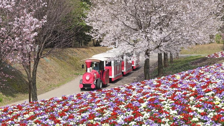 ◆とっとり花回廊[4月]