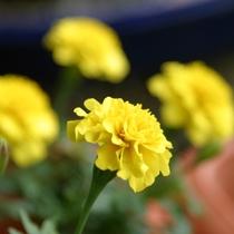 お花のおもてなし