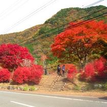 *【周辺・景観】木々が美しく色づく秋の紅葉風景。まさに絶景です。