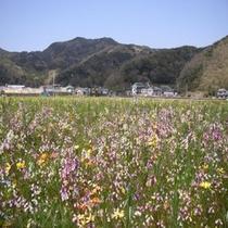 松崎町のお花畑