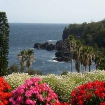 城ケ崎 四季の花公園