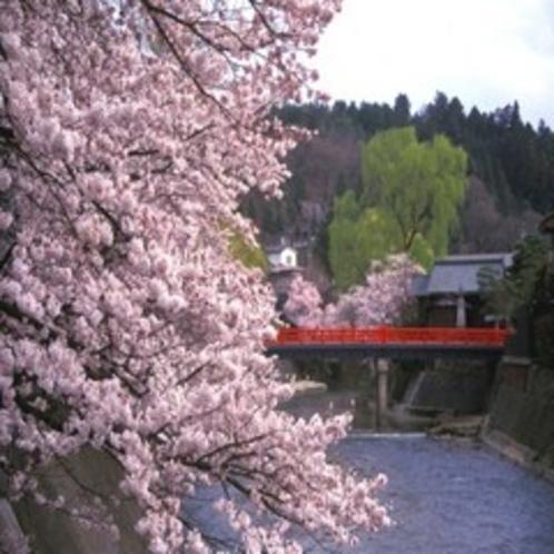飛騨高山の春の中橋。当館よりお車約45分。