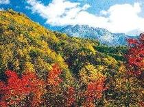 紅葉と雪景色の焼岳。奥飛騨の紅葉見頃は例年10月中旬〜11月初旬