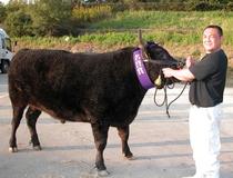 太田畜産の但馬牛