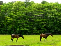初夏の牧場