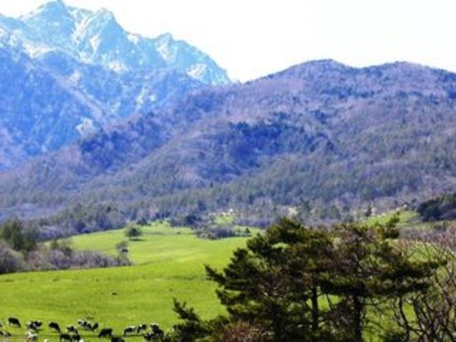 八ヶ岳牧場の牛たち