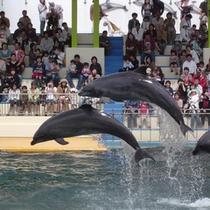 *見て・ふれて・楽しく学べる越前松島水族館♪