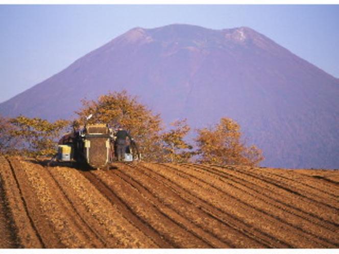 収穫を迎えトラクターが大忙しです
