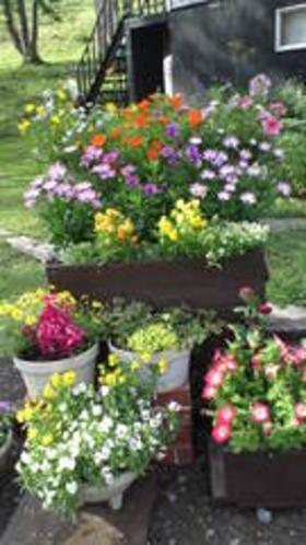 ペンション前の花々