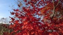 森林公園にて、色鮮やかです。