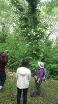 宿から徒歩5分、いこいの湯宿いろはの森林公園で散策