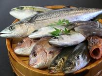 旬の魚介素材
