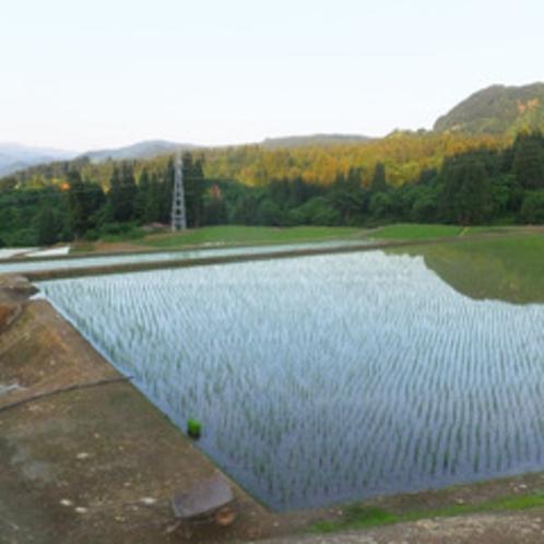 *【周辺】魚沼産のなかでも特に美味しいと言われる「塩沢産コシヒカリ」を自家製で作っています。