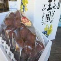 岡山が誇る幻のぶどう『紫苑(しえん)』糖度が高く、種なしで食べやすいよ!