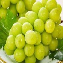 果物王国岡山の≪シャインマスカット≫糖度が高く、種なしでしかも皮ごと食べられるよ