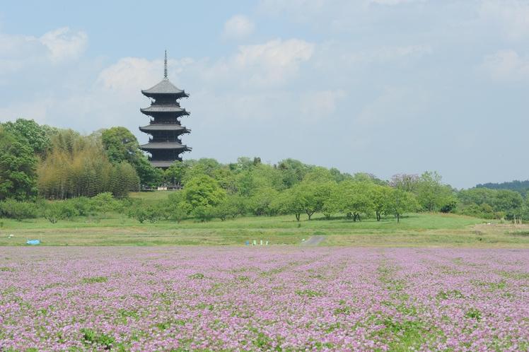 【春】れんげと備中国分寺五重塔