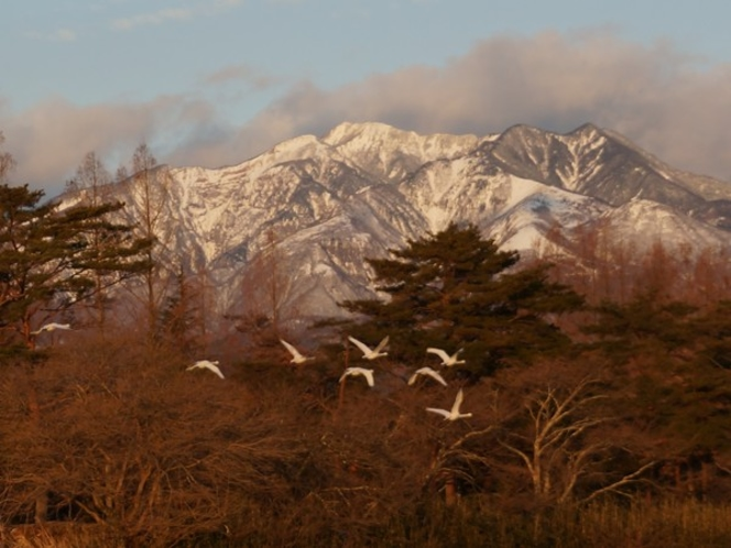 白鳥と女峰山