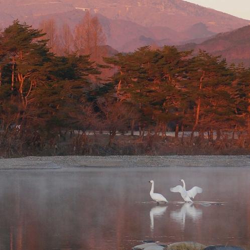 朝焼けの女峰山と白鳥