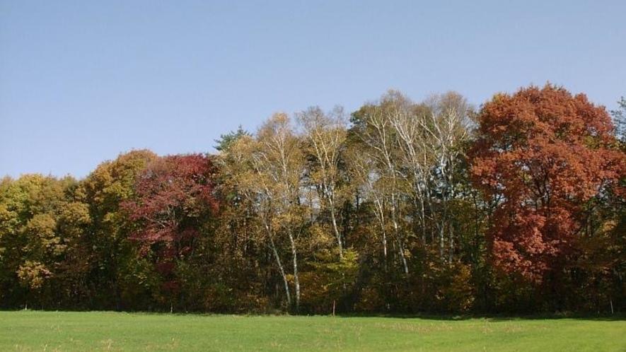 秋色に染まった林に夕日がさす美しさは格別です。