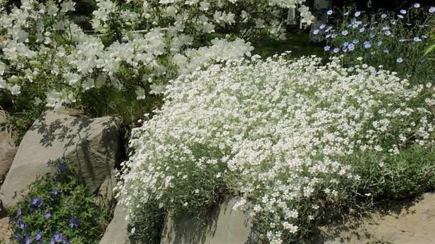 春はいつもホワイトガーデンから始まります。