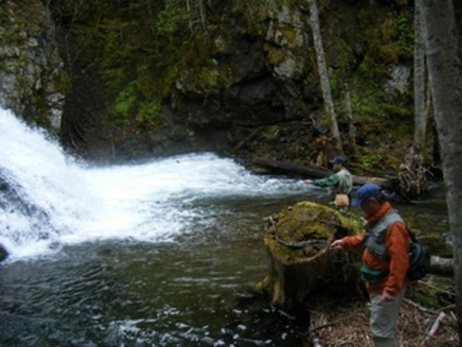 渓流釣り。