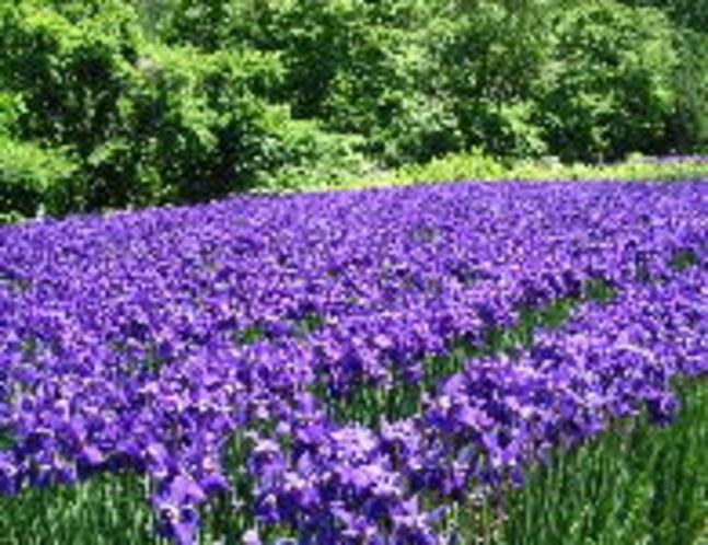 花しょうぶ公園