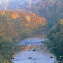秋の尻別川