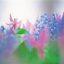ニセコの花②