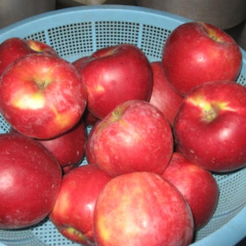 *りんごの収穫