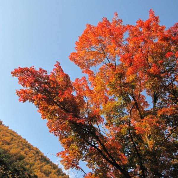 浅間山荘の秋3