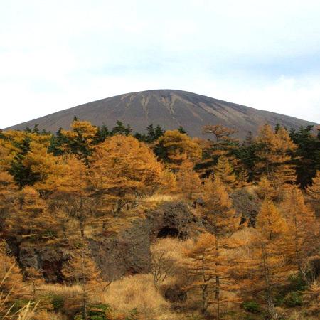 浅間山の紅葉。黄金色に色づくカラマツは圧巻の景色です。