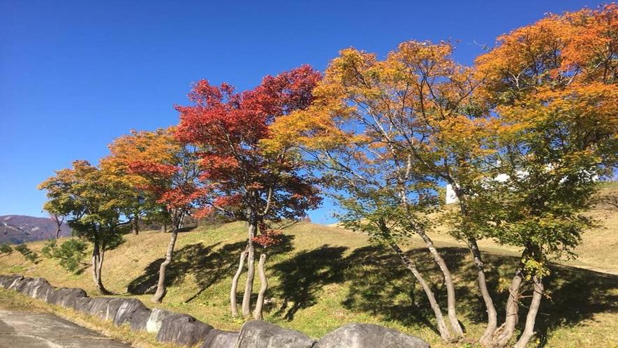 *周辺風景/秋には澄んだ空気の中、紅葉を楽しみながらの散策もおすすめ。