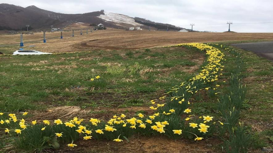 *周辺風景/四季によってさまざまな草花が岩原高原を彩ります。