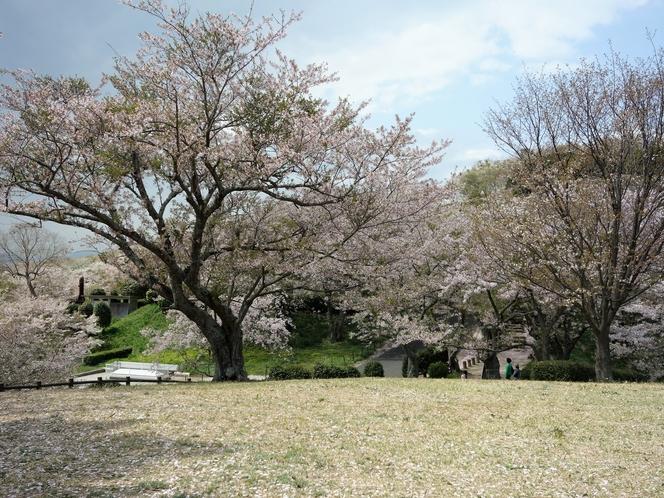 竜王山公園 桜