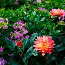 【ビジネスインうめさき】庭園には季節折々の花が咲き誇ります。