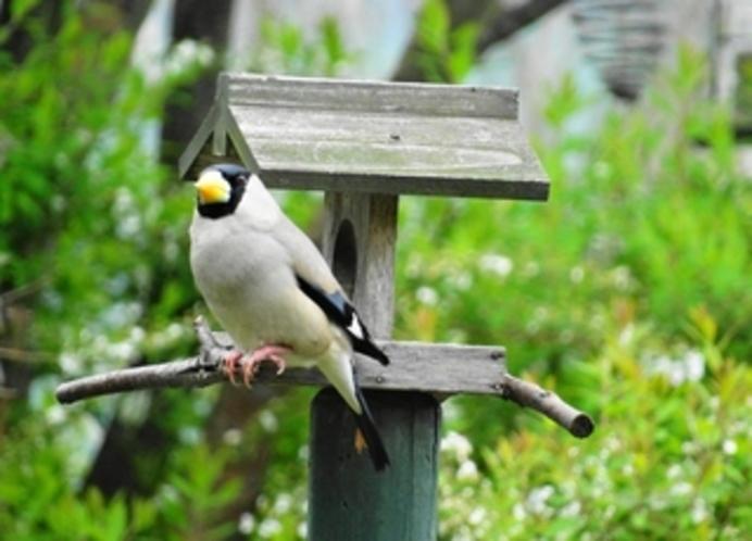 庭先には、野鳥の姿も