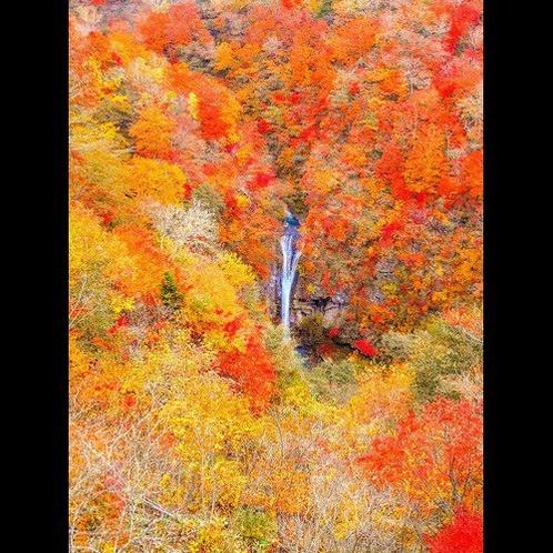 駒込の滝。