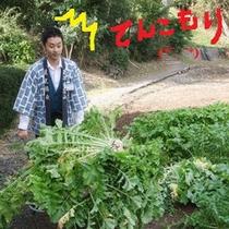 *野菜収穫2