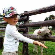 【マザー牧場】お子様の笑顔がいっぱいあふれる南房総NO1観光スポット