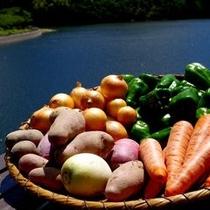 【千葉のおいしいがいっぱい】産地直送の美味しい野菜を使用しております※イメージ