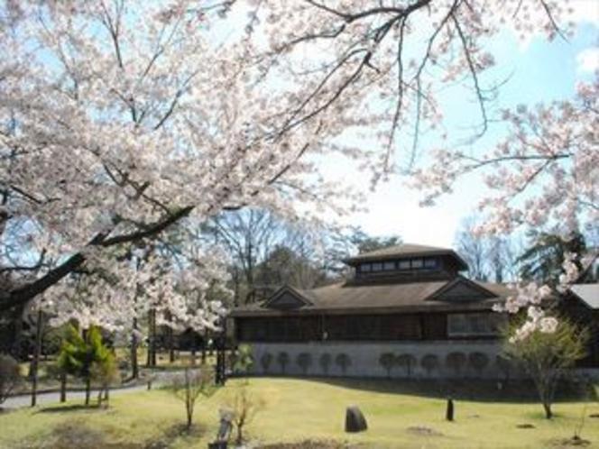 敷地内には数多くの桜があり、この時期ならではの風景が楽しめます