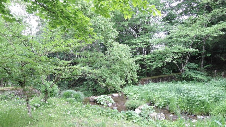 *周辺/敷地内には小さな川が流れています。